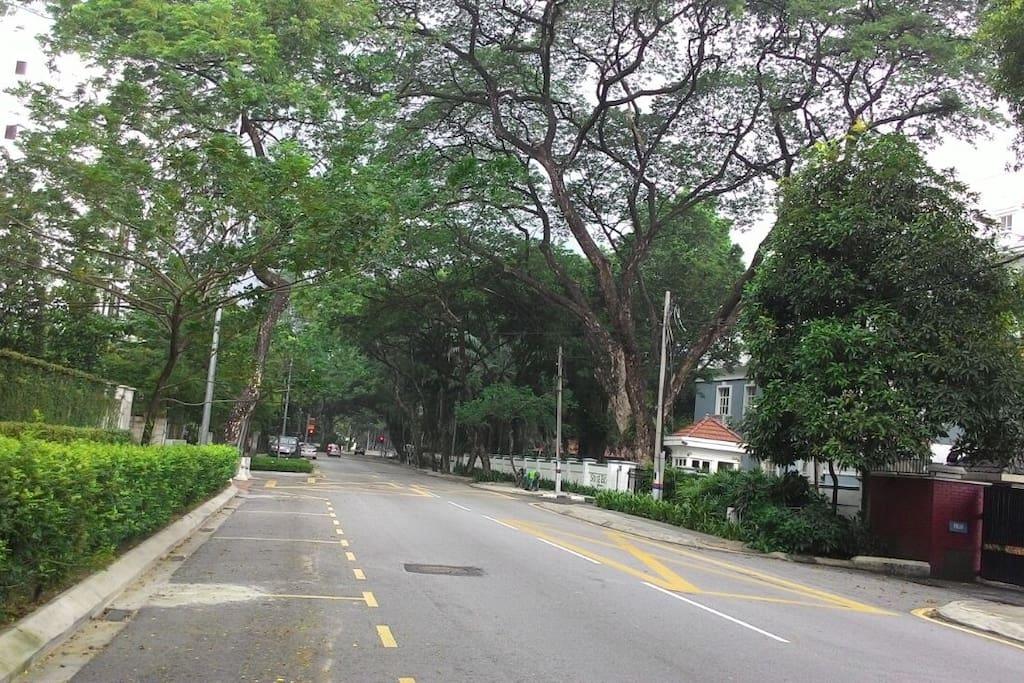 Leafy and green Jalan U-Thant to Condo