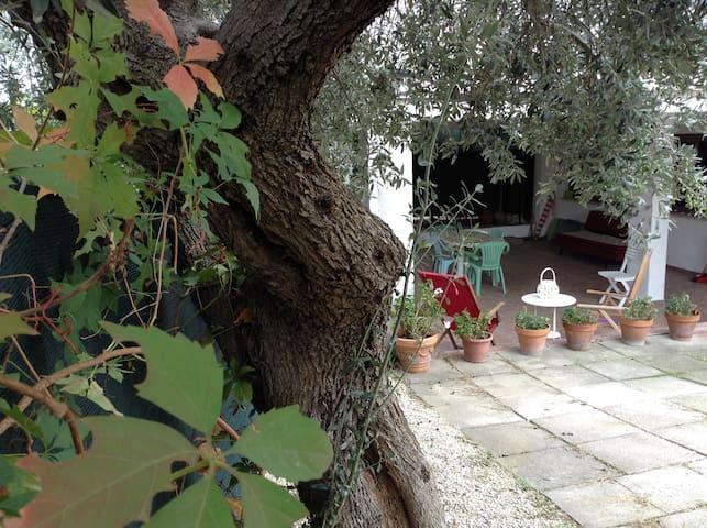"""Guest house """"Il vecchio ulivo"""" - Vasto - Villa"""