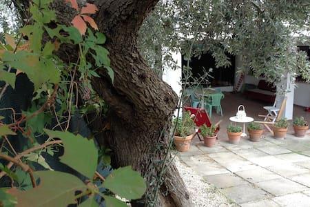 """Guest house """"Il vecchio ulivo"""""""