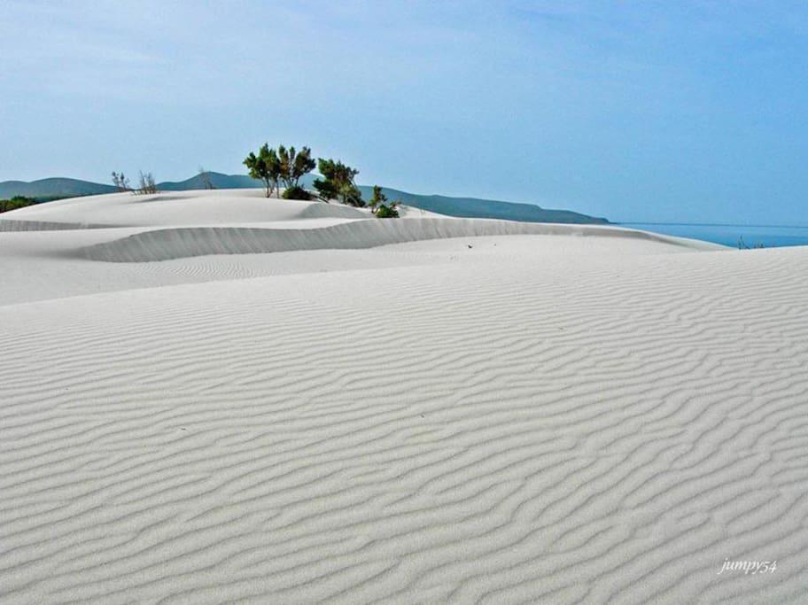 Dune poro pino