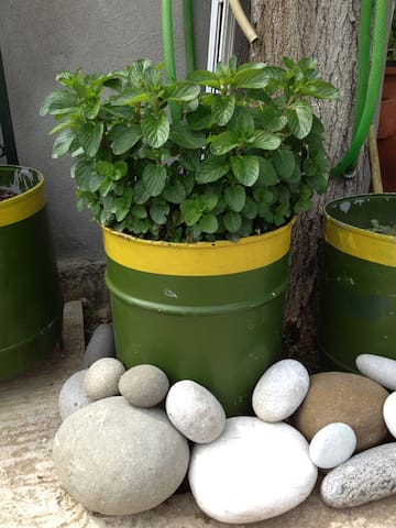 Pots with a variety of herbs