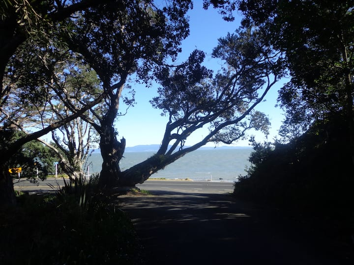 Birdwood, on the coromandel coast