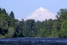 Snowcapped Mt. Hood, in front of what Oregon is known for: green trees and waterways!