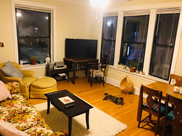 Living room with west and south facing windows. Comfy vintage couch and chair. TV with all the streaming services. Dining table for work or... dining. Wool rug, plants, stereo, and kitty the accessories.