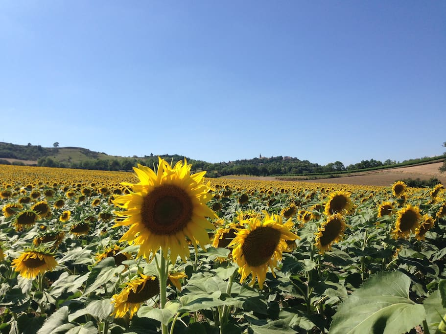 Sunflower fields surround the house.  Fanjeaux village in the distance.