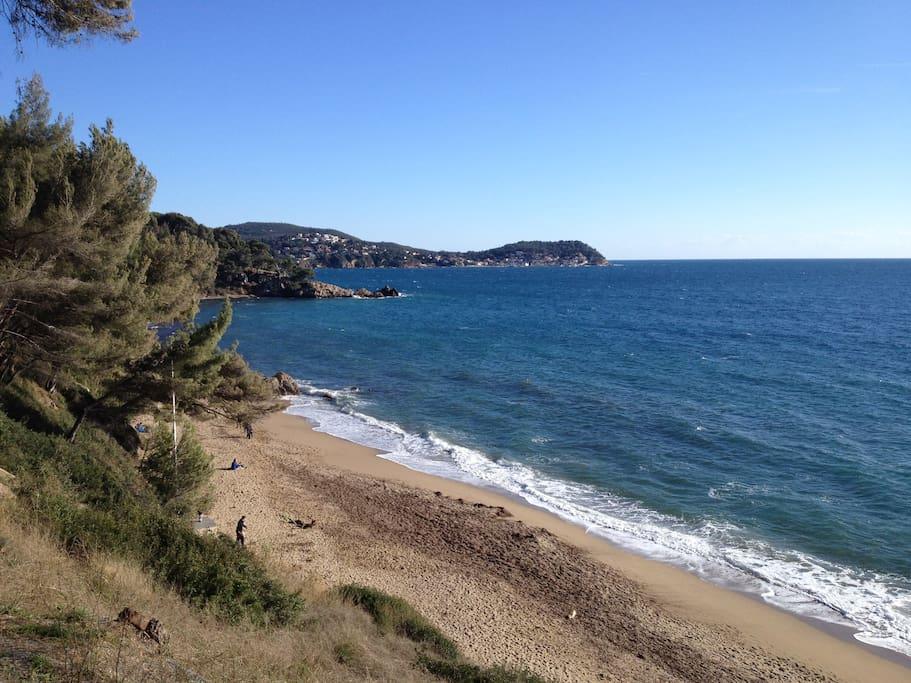 plage du Monaco dans les pins