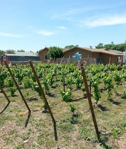 G & M Livermore Wine Country Getaway #2 (pets ok)