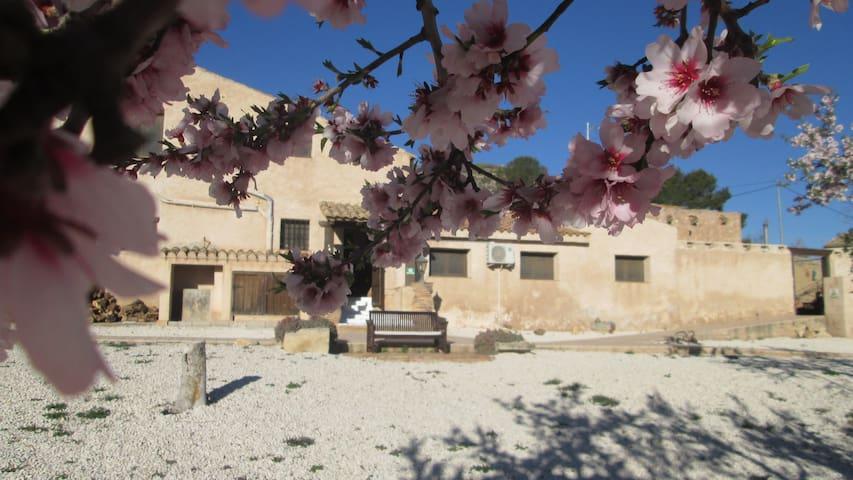 The Olive Tree - Cañada del Trigo - ที่พักพร้อมอาหารเช้า
