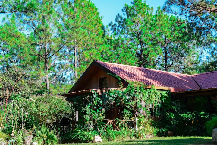 Beautiful cabin on amazing forest in Perquin