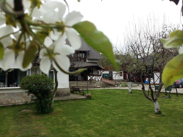 Charming Sf Nicolae 3***- agroturism pension - Aluniș