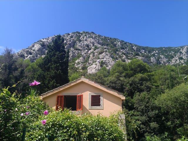 Lobagola Mediterra - Trstenik