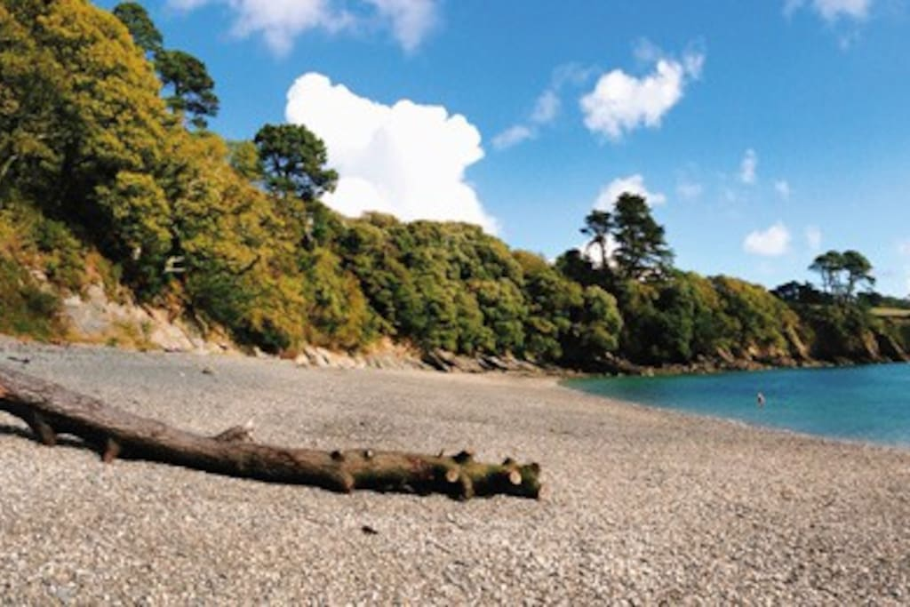 Dog friendly all year, secluded and non-touristy Grebe Beach.