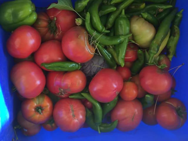 Bounty from 2015 farmhouse gardens