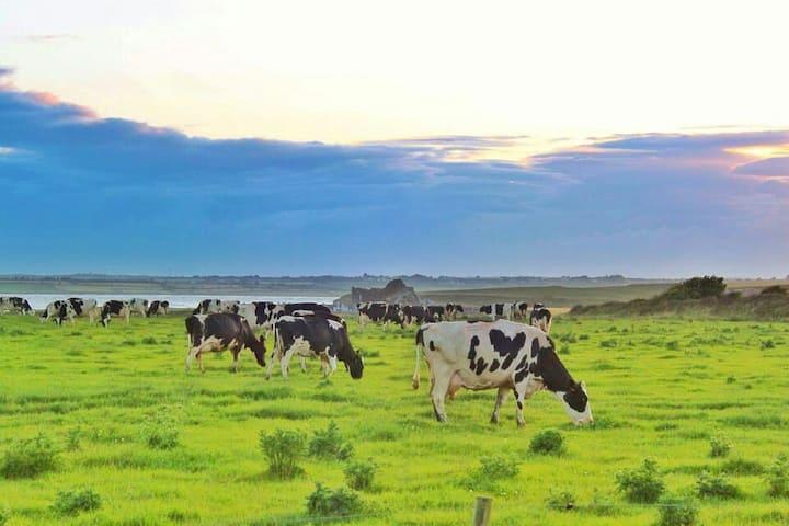 Working Dairy Farm Farmhouse Seaside Annexe