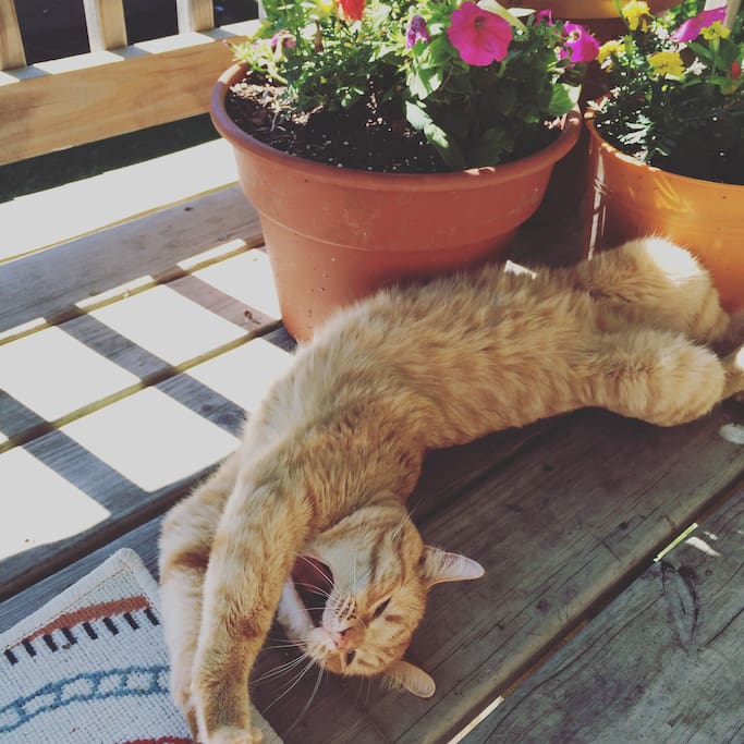 Our Deck is a cozy place to snooze in the sun.