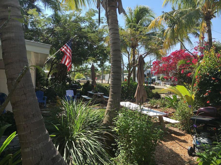 Front yard with an abundance of tropical plants and Coconut Palms