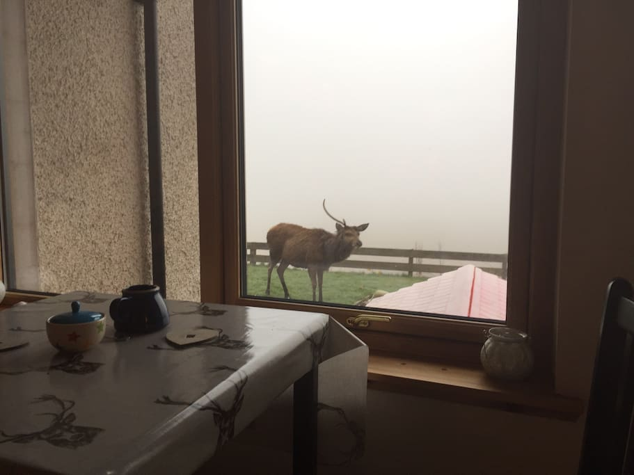 Maybe the local deer may visit, photo taken April 2017