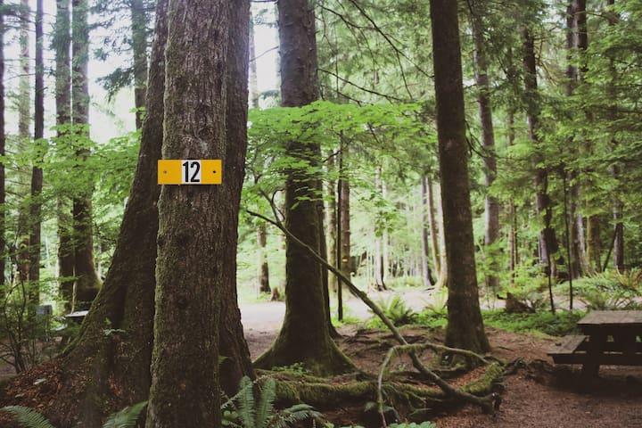 Campsite #12 · Forest Campsite