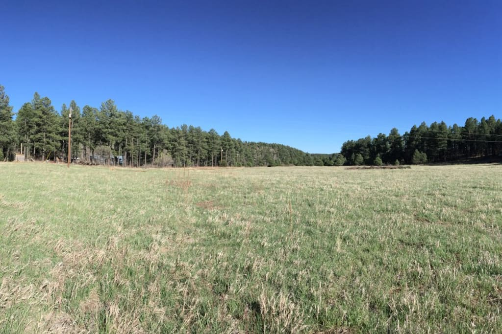 Meadow behind cabin