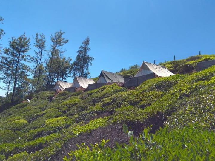 Swiss Tents