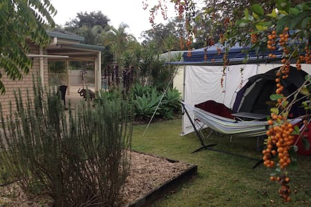 Beerwah Camp Away From Home For One - Beerwah - Tent