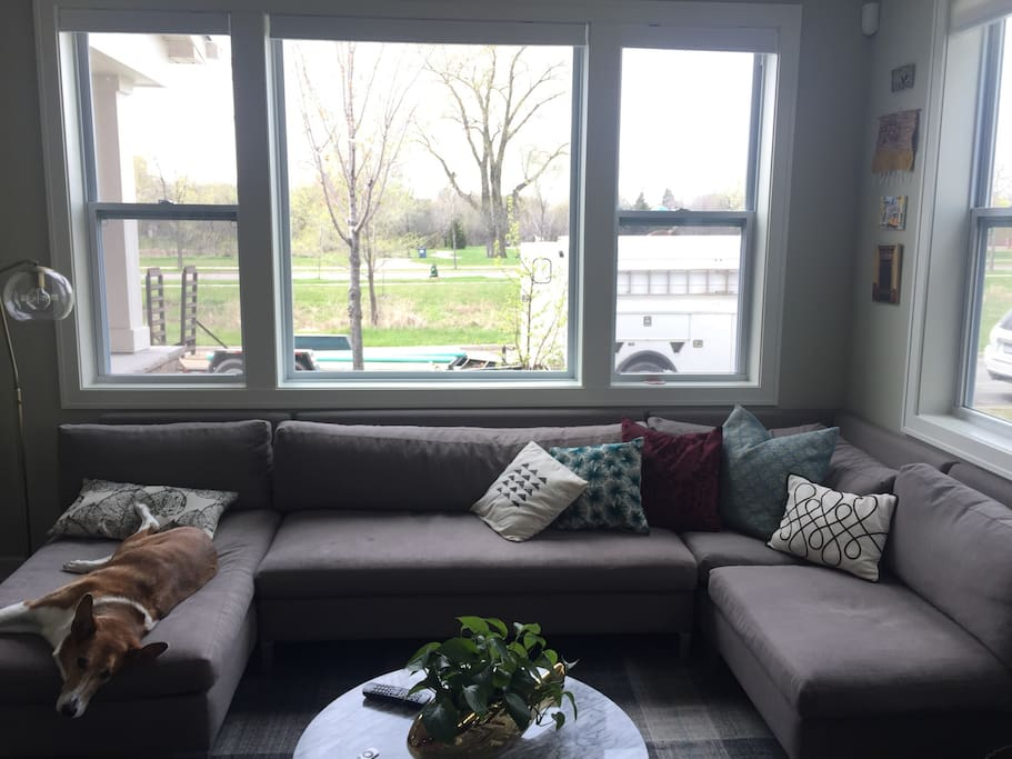 A room with a view and pup!