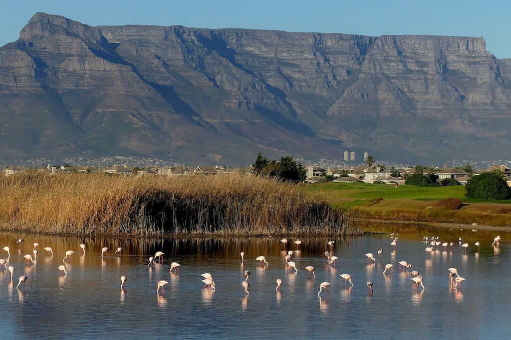 Nature experience close to Cape Town