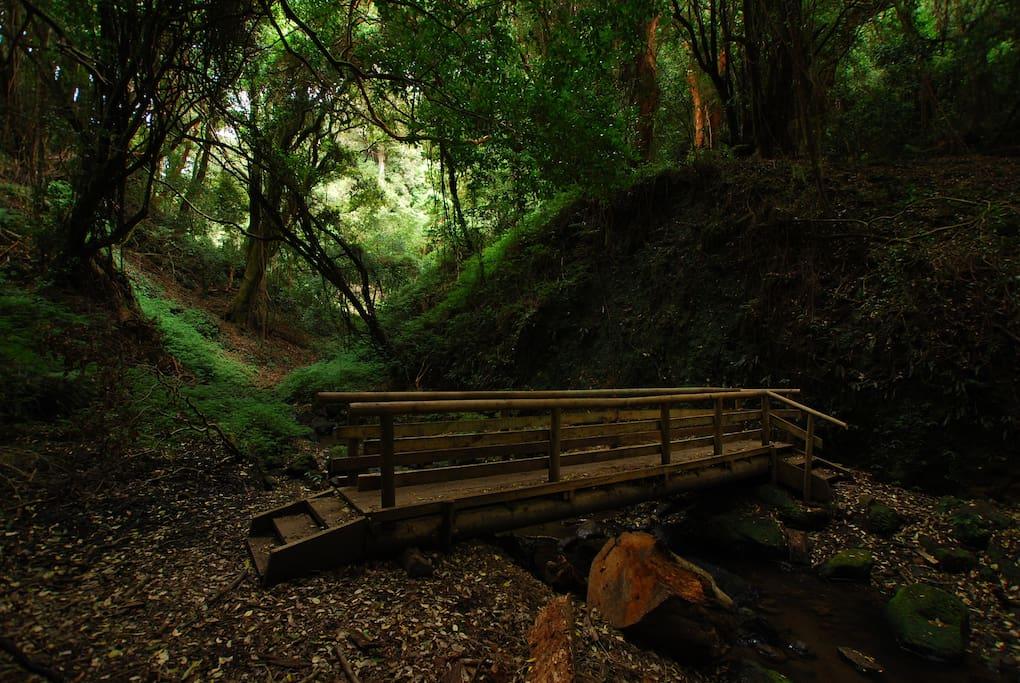 Reserva Isla Mocha