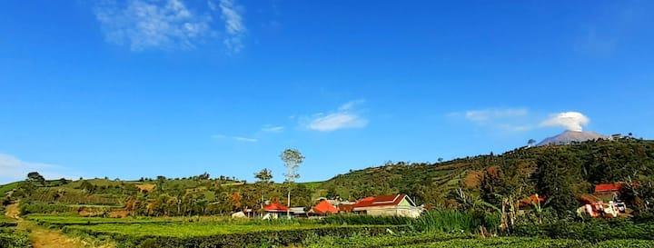 Kampung Homestay Kerinci