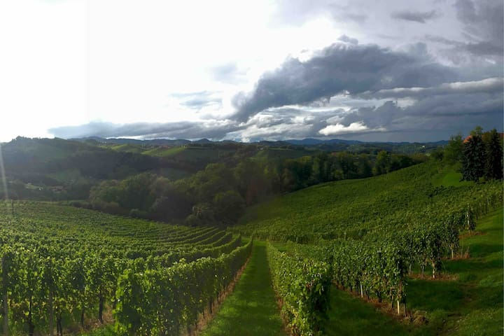 Ein Weingarten in der Nähe im Herbst