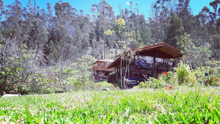 Food forest and Treehouse / Cuenca-Ecuador
