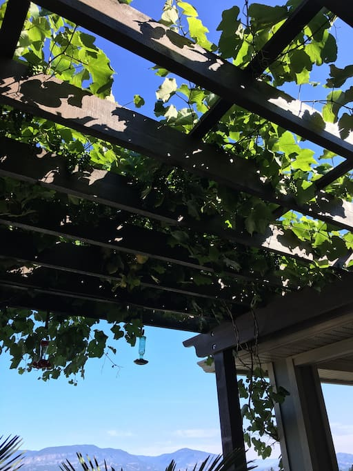 Grapes growing on the upper deck