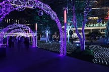 Beautiful sight seeing at Central Park Mall garden