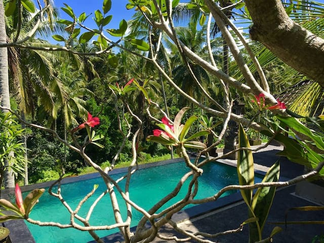 New offer 2bedroom home!! ricefield view,pool,ubud