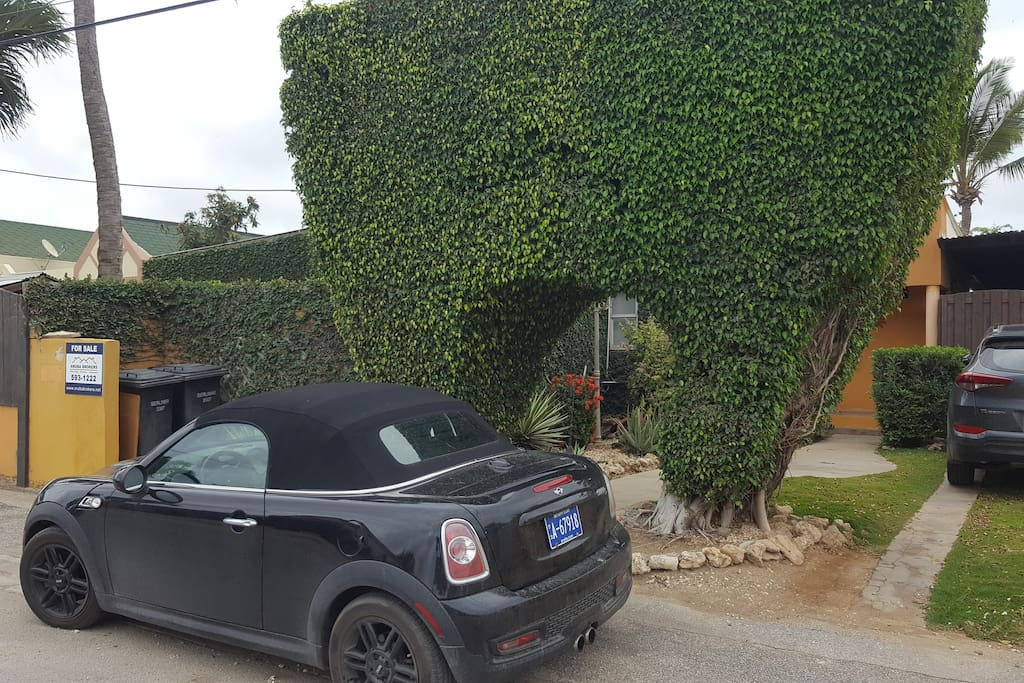 Nice entrance with huge ficus. Plenty of parking space.
