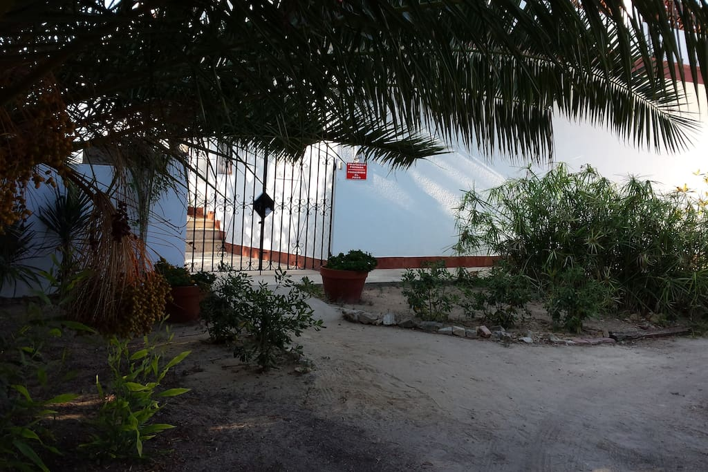 Front entrance under a Palm tree