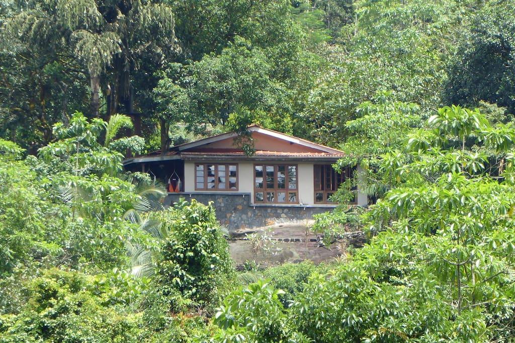 Unsere Singharaja Garden ECO-Lodge, umgeben von der endlosen Natur.