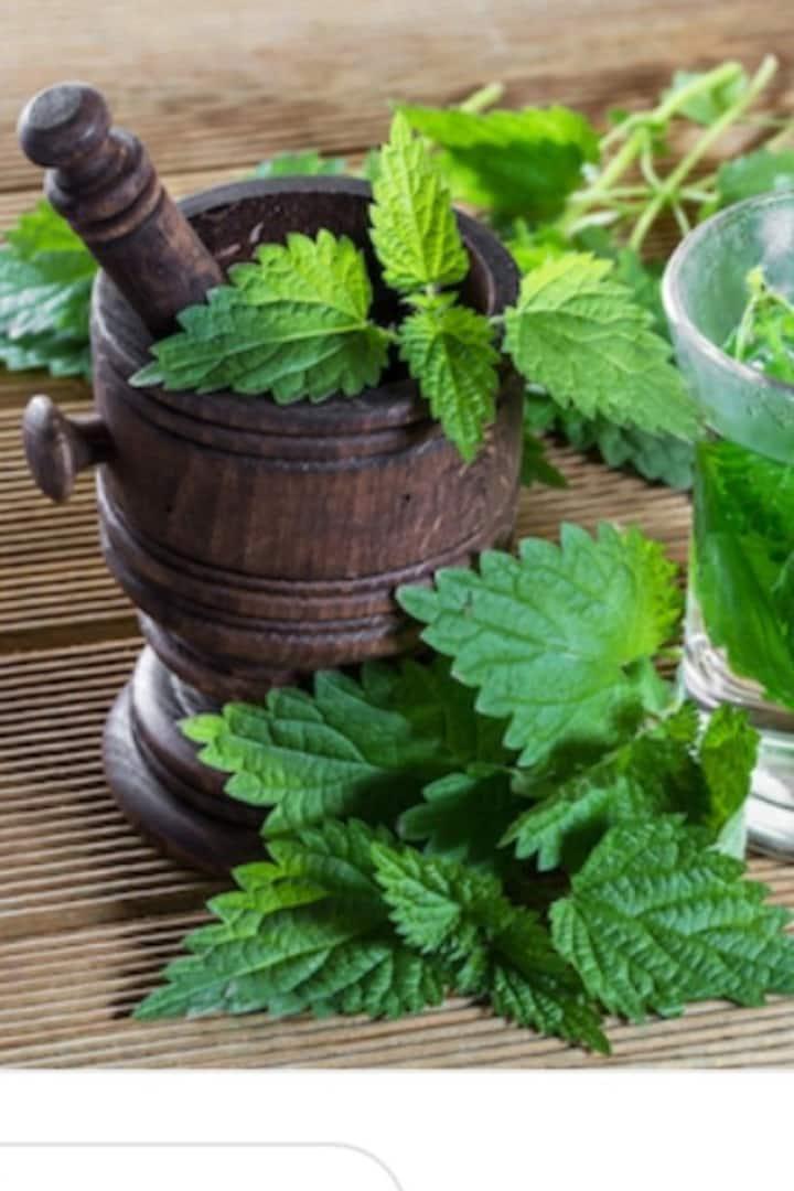 Liquorice Mint & ortica