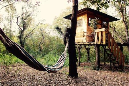 Cozy cabin in Mallorca! - Llubí - Chatka