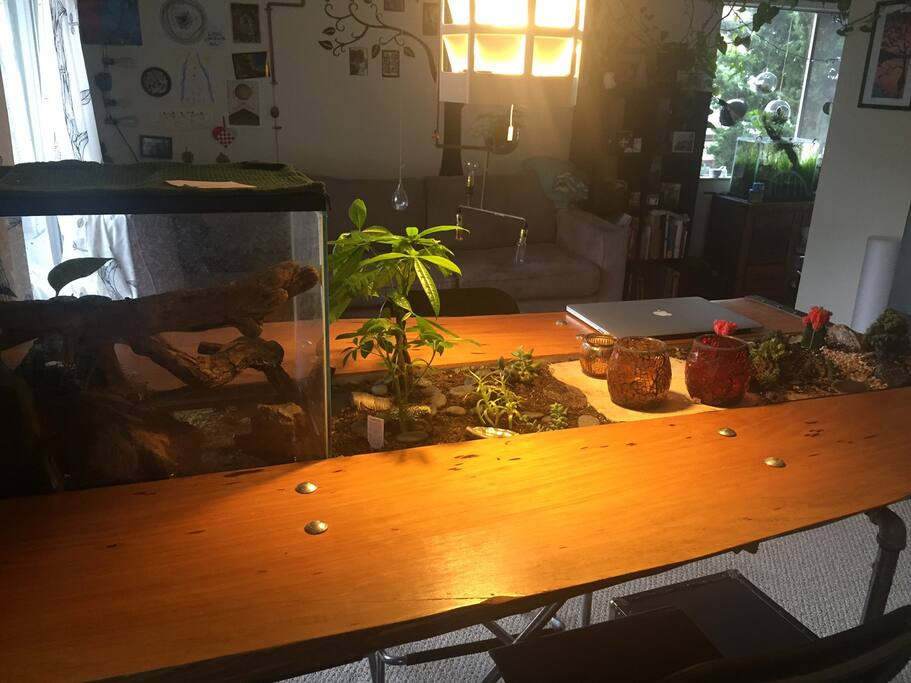 Homemade cyprus bar-table with frog terrarium and plants