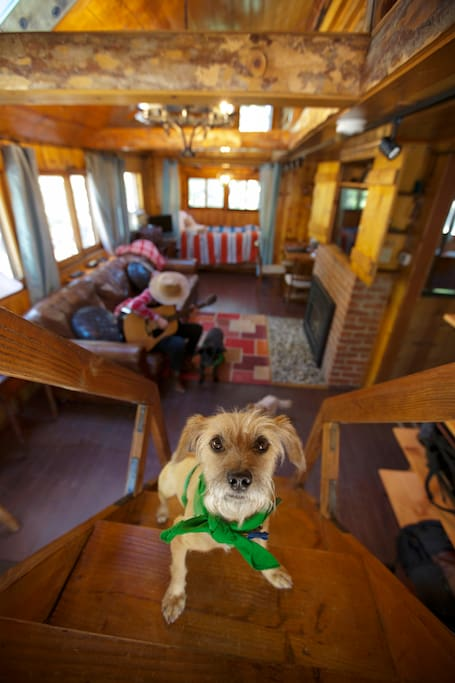 Spoiled Dogs are welcome at Idyllcottage