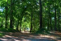 La forêt au portillon du camping qui mène aux plages du lac.