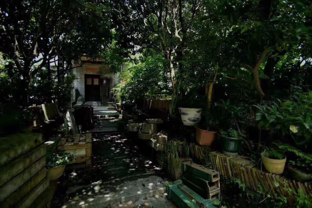 前庭后院占地200平方米,果树环绕,桂花飘香,光影婆娑