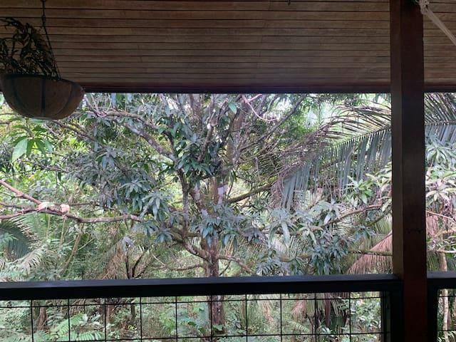 Moderm jungle loft