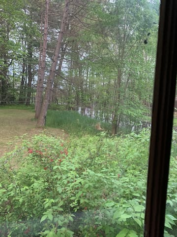 Backyard view of woods