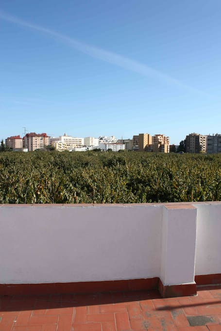 Vista desde la azotea-chirimoyales / Views from the rooftop- with chirimoya trees.