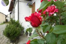 La Rosa della Piccola Casa