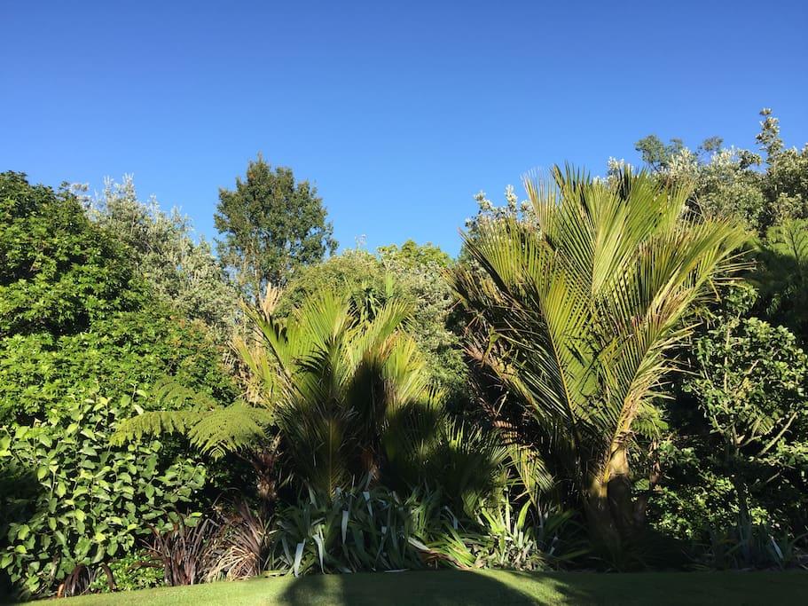 Garden provides privacy