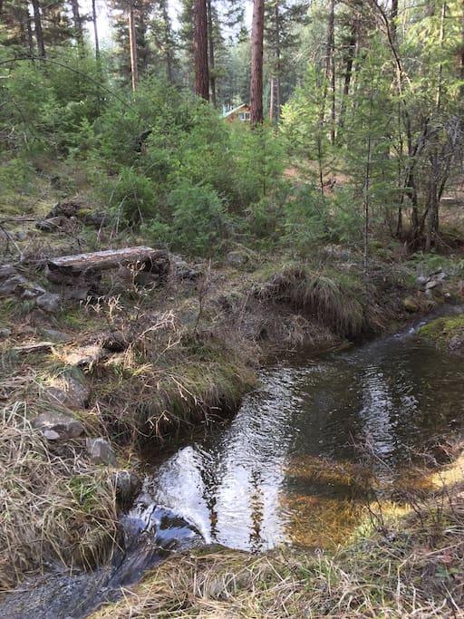 Creek and pond below cabin