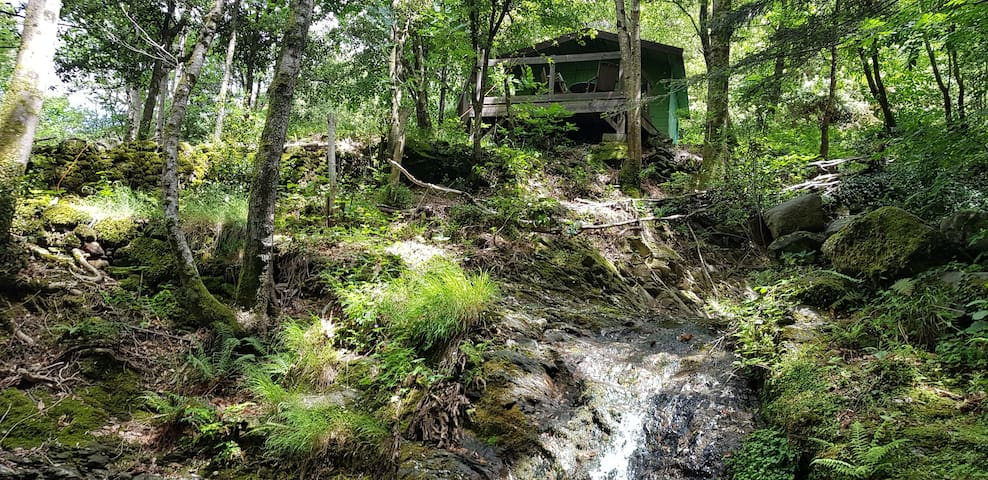 """""""Walden"""", la cabane de la forêt,"""